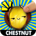 Chestnut POP!